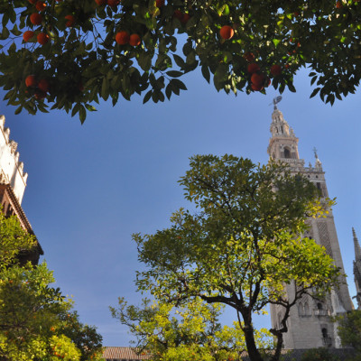 Perspectives -Séville orangers et Giralda